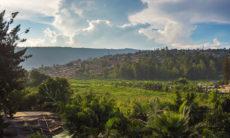 L'opération Turquoise au Rwanda